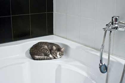 Kediler Banyo Yapar mı?