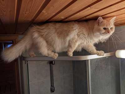Kedileri Yıkarken Dikkat Edilmesi Gerekenler Nelerdir?