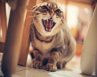Kedilerdeki Stres ve İştahsızlık Sebepleri?