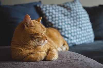 Kedilerin sağlığa faydaları nelerdir?
