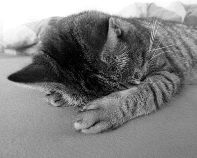 Kedim Niçin Sürekli Yorgun?