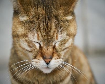 Kedilerdeki İştahsızlık Sebepleri ve Çözümü Nedir?