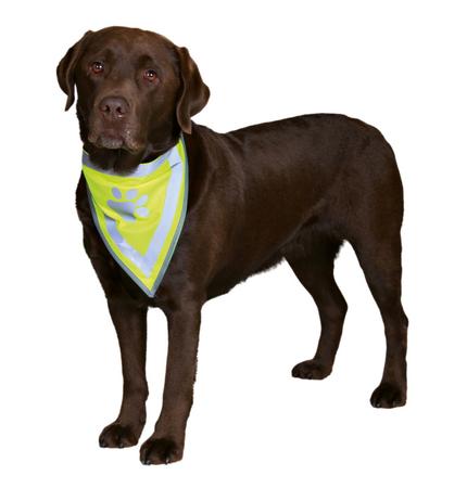 Trixie Köpek Bandanası 42-60cm (L/XL)