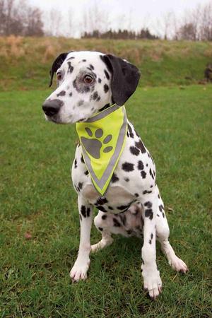 Trixie Köpek Bandanası 29-42cm (S/M)